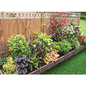 Garden on a Roll Mixed Shady Plant Border - 600mm x 8m