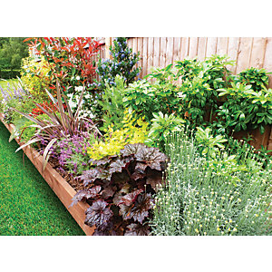 Garden on a Roll Mixed Sunny Plant Border - 600mm x 7m