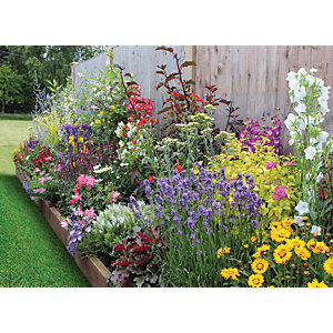 Garden on a Roll Wildlife Plant Border - 600mm x 5m
