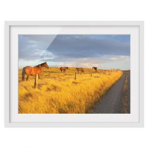 Country Road and Horses in the Evening Sun Framed Photographic Art Print on Paper East Urban Home Size: 40cm H x 55cm W, Rahmenoptionen: Matt white