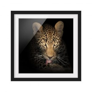 Resting Leopard Photographic Art Print on Paper